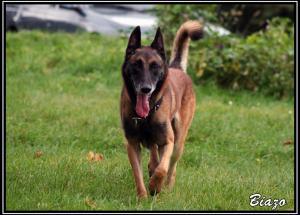 Biazo(1)---Explo---2007