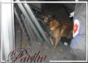 Pacha-STUP(9)-2006