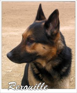 Rex(10)---STUP---2004