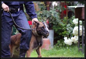 Airton(02)---(DetectInter)---01.08.2012