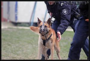 Azzo(3)---Patrouille---31.01.2011---