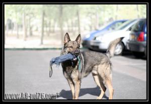 Dexter4-Explo-28.05.2011-