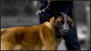 Elvis(01)---(DetectInter)---10.05.2012