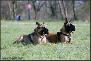 Feline et Punch2-DetectInter-22.03.2012