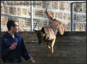 Hatch(1)---Patrouille---2010---