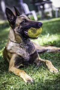 k9pol75-02092016-Litacsmall-friend-