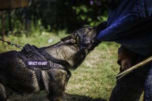 k9pol75-02092016-friend-Impact(02)small-