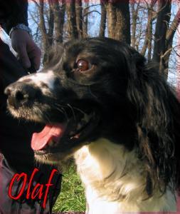 Olaf(1)---Explo---2003