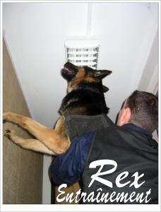 Rex(11)---STUP---2006