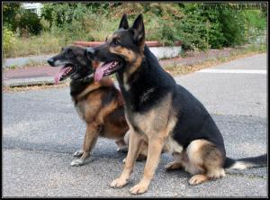 Rex et Pacha---STUP---2008