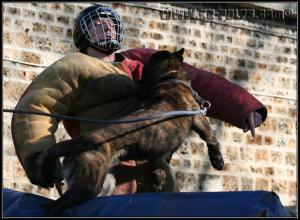 Roy(2)---Patrouille---2009
