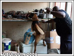 UBU---STUP---2006