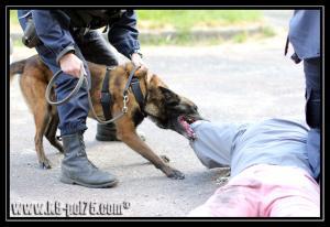 Airton(2)---Patrouille---28.05.2011---