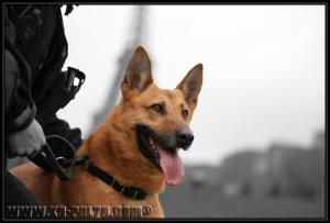 Bastos(8)---Patrouille---31.03.2011---