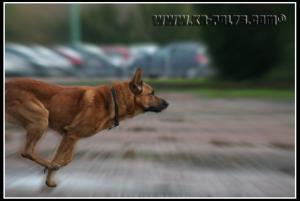 Cid(2)---Patrouille---2010---