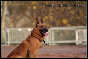 Cid(4)---Patrouille---2010---