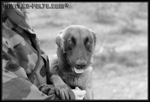 Hasko(1)---STUP---31.03.2011---