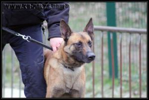 Patrouille(-1-)---31.01.2011---