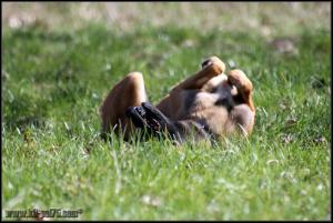 Yoda(4)---STUP---23.03.2012---.jpg (1)